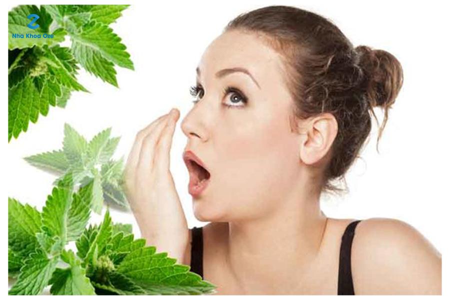 Lá bạc hà là nguyên liệu tốt để giảm mùi hôi miệng