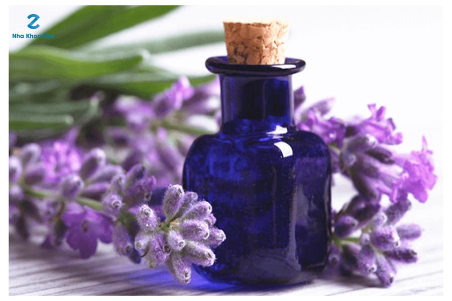 Tinh dầu oải hương có khả năng giảm đau, viêm vô cùng tốt