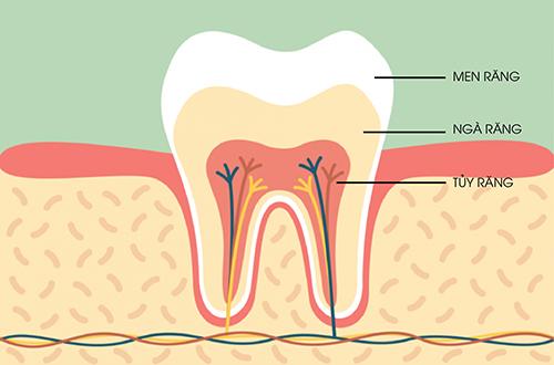 Tủy răng đóng vai trò quan trọng quyết định đến sức khoẻ của chiếc răng đó và toàn bộ khoang miệng